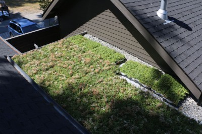 Living Roof Install3