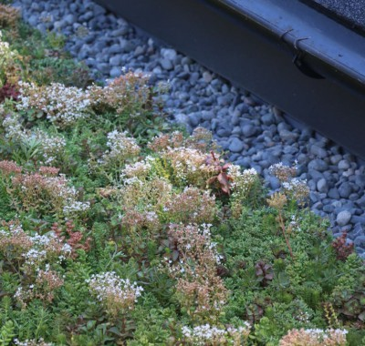 Living Roof_Detail