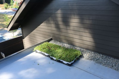 Living Roof_Single